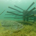 fish-habitat-19.jpg