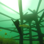 fish-habitat-16.jpg