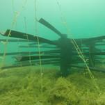 fish-habitat-15.jpg