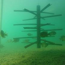 fish-habitat-24.jpg
