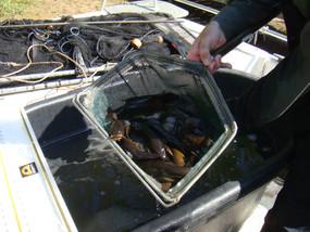 Legend Lake Fish Survey Photos 007.jpg
