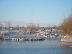 Pond-in-winter.jpg