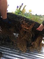 Roots-Below-TI-Islands.jpg