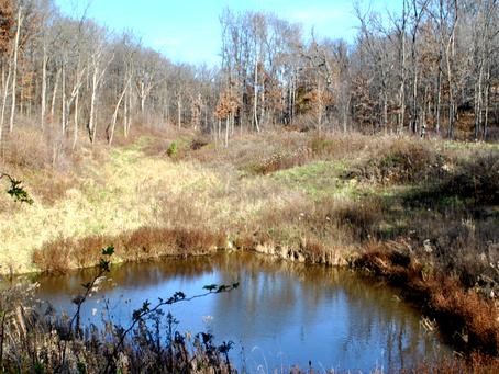 Wildlife Ponds: Creating an Abundant & Diverse Ecosystem