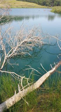tree fall2.jpg