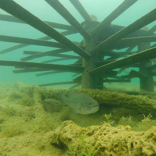 fish-habitat-18.jpg