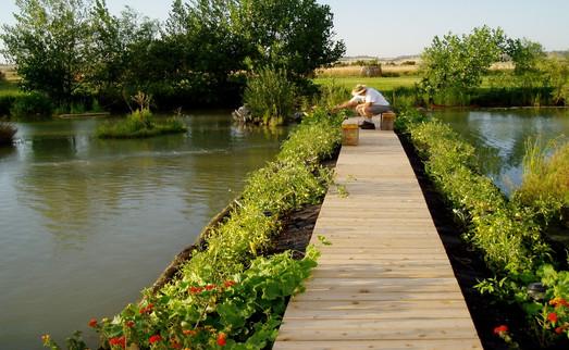 border-garden.jpg
