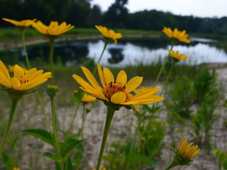 The Importance of Native Habitat Plantings