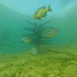 fish-habitat-22.jpg