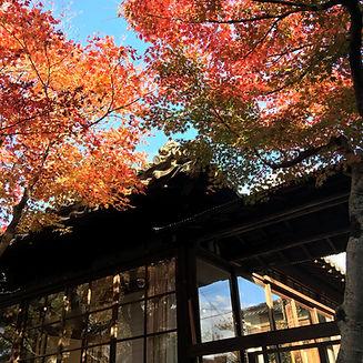 秋の中庭.jpg