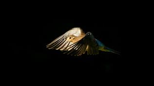 Dove In Light 2