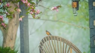 Spring Morning  (1 of 1).jpg