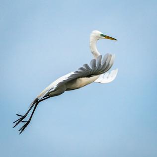 Super Egret