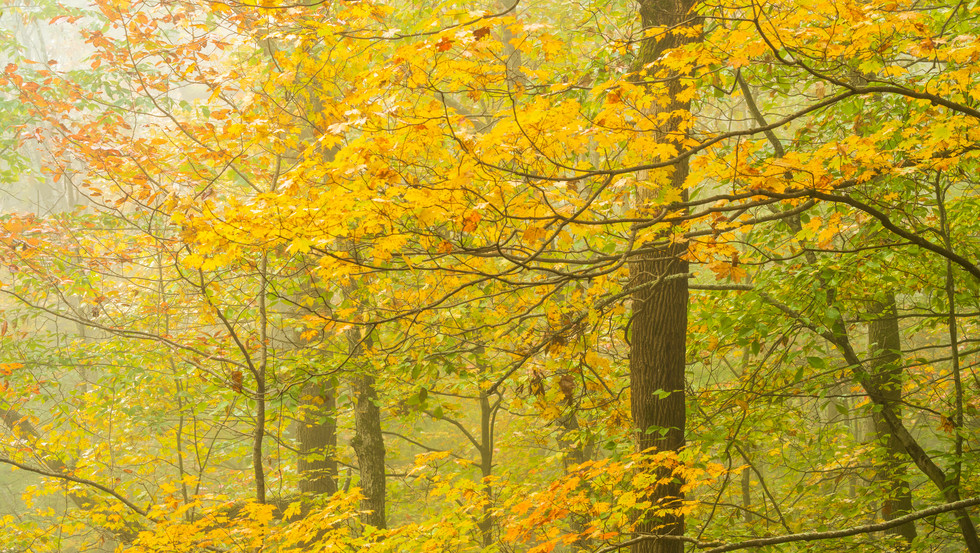 Fall, Sunlight And Fog