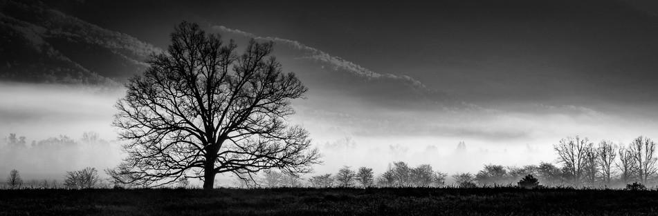 The Tree In Fog