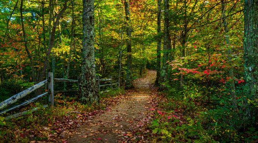 The Trail To Chimney Top Rock