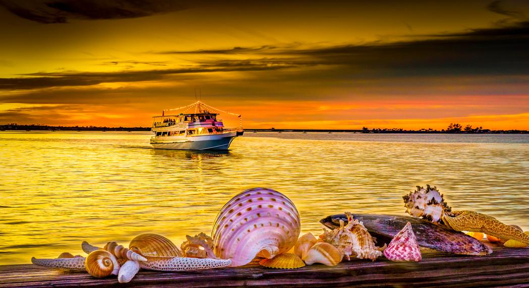 Sanibel Shells