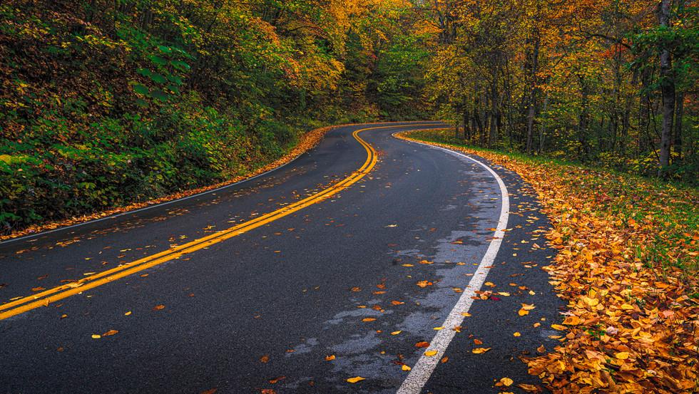 Fall On Lake Road