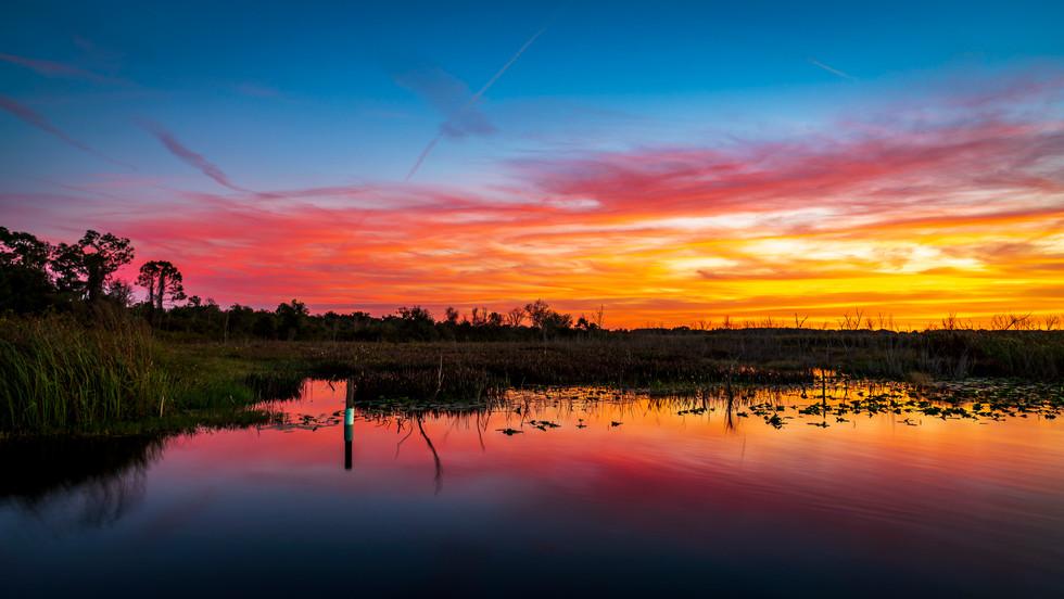 Pastels In The Wetlands