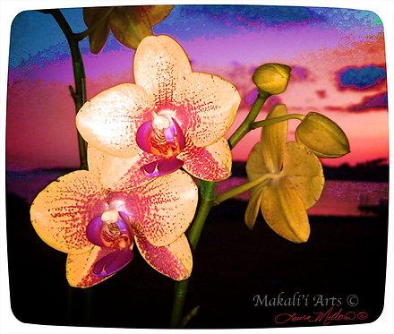 Hawaiian Orchid Sunset