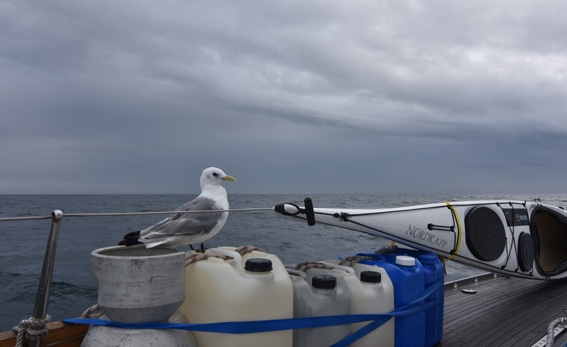 Gull at rest