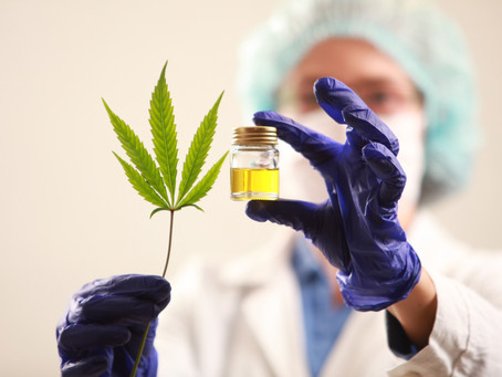 How medicinal cannabis could be the future of pain management