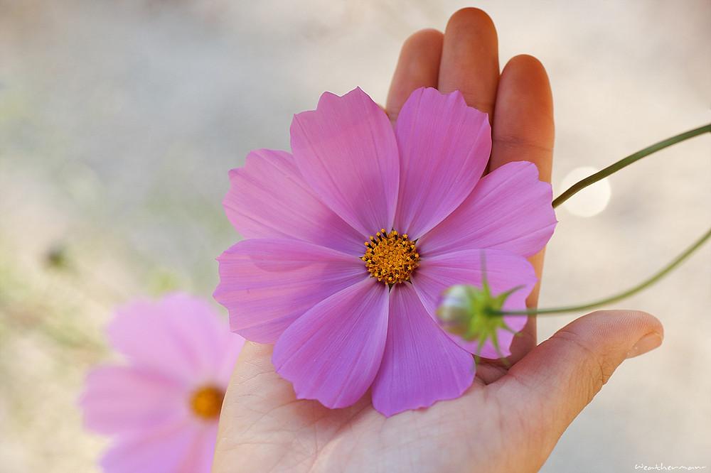 Fleur posée dans la main
