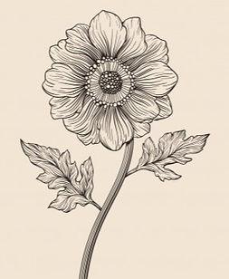 hand-drawn-vintage-beautiful-botanical-f