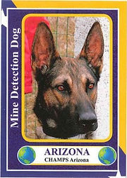 Arizona-baseball-1-215x300.jpg