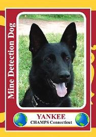 yankcard-211x300.jpg