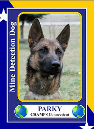Parky-4.jpg