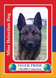 Tiger-Pride-trading-card_front-216x300.p