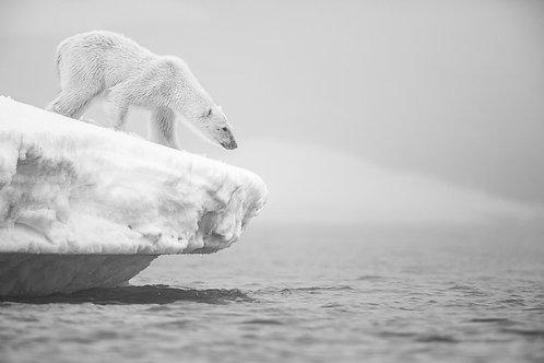 Polar Bear and Iceberg