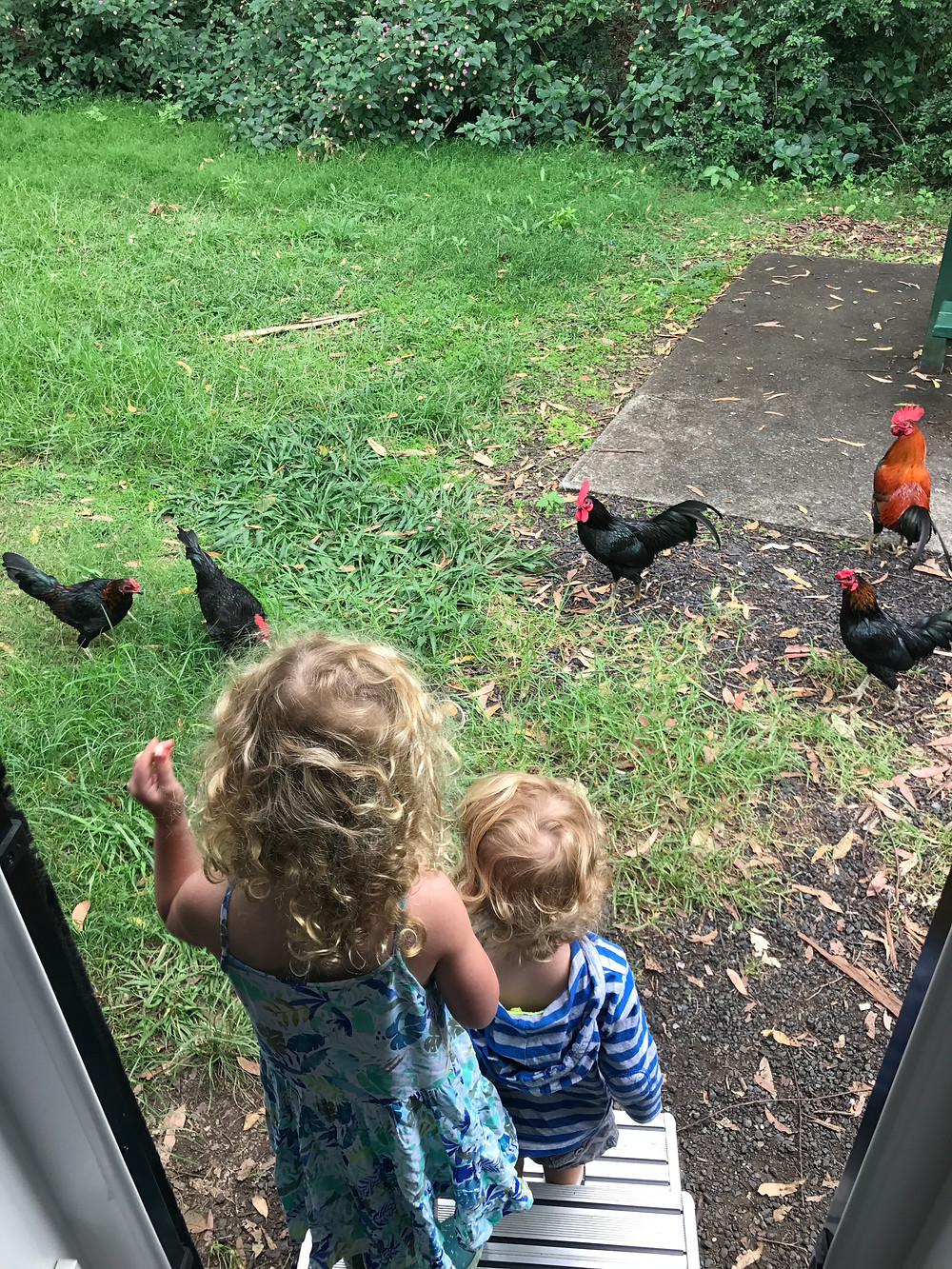 Feeding the chickens at Tom Cat Creek rest area