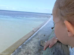 Heron Island jetty