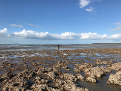 Low tide at Clairview