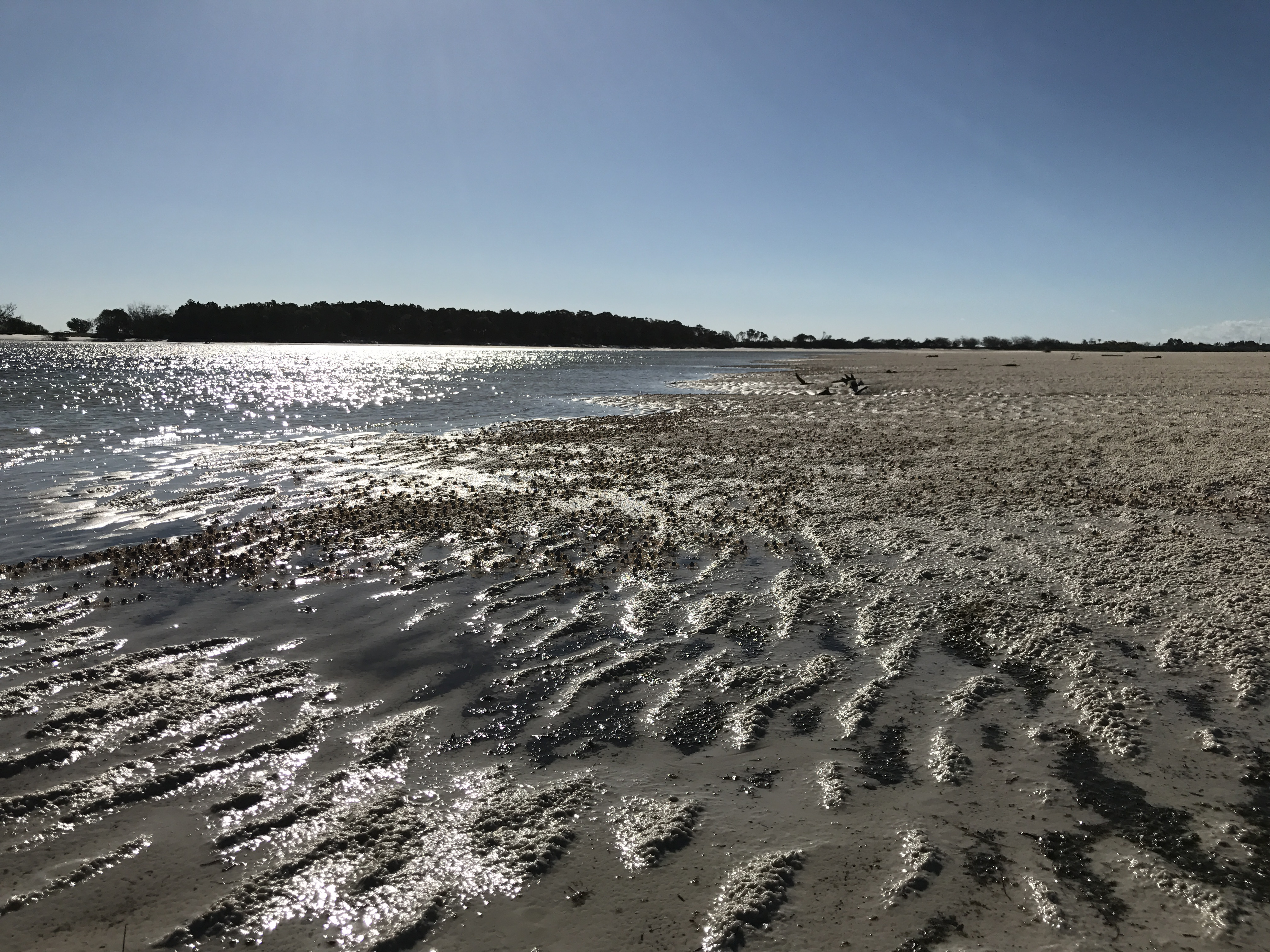 Wathumba Creek at low tide