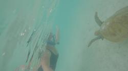 Bec found a turtle friend