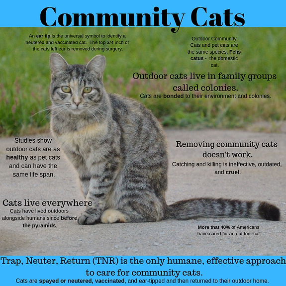 Outdoor Community Cats and pet catsare t