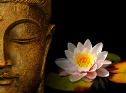 buddha-wallpapers-photos-pictures-h2o-lily.jpg