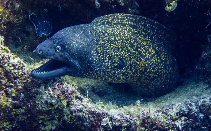 Octopus_Reef_05.jpg