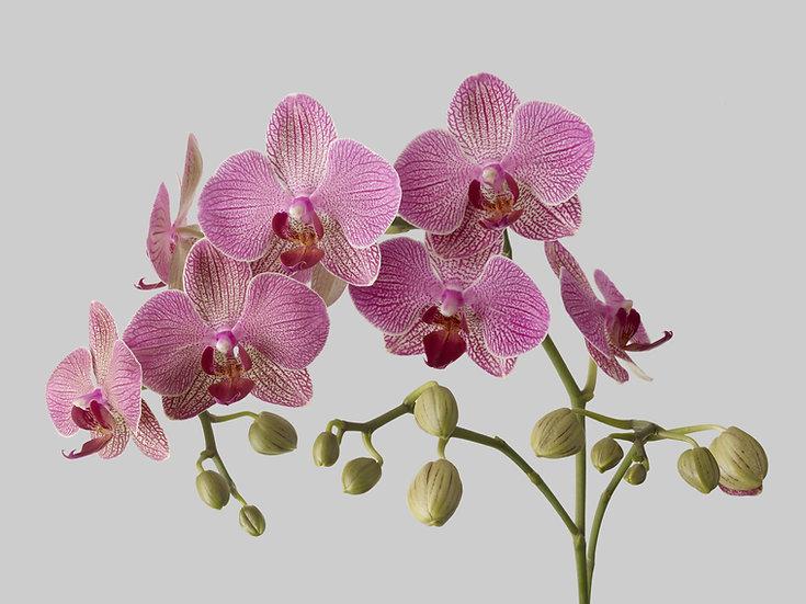 Outrageous Orchids