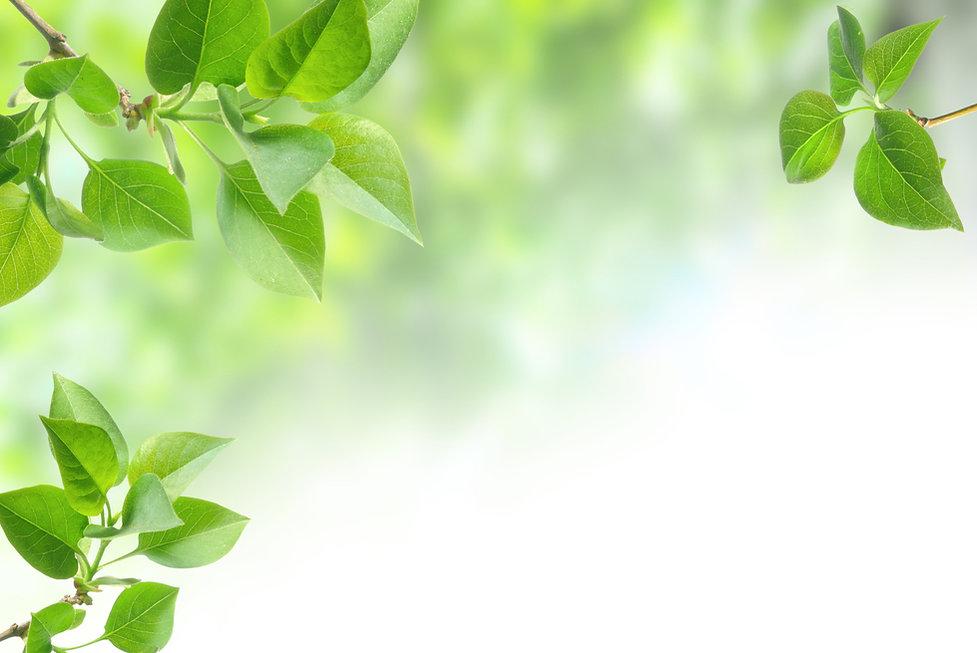 green leaves isolated on white.jpg