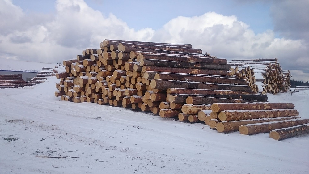 ไม้สน ไม้สนรัสเซีย ไม้สนนอก SAK WoodWorks สักวู้ดเวิร์ค ข้อควรรู้ เกร็ดความรู้ งานไม้
