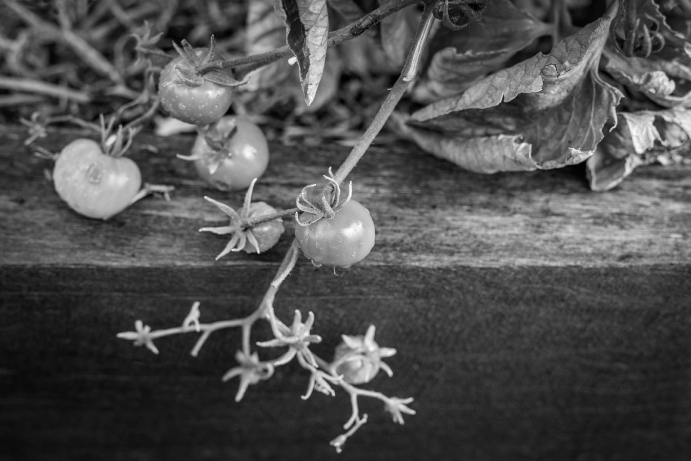 The Currant Shed