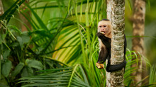 Jaco Beach Monkey Tour  -