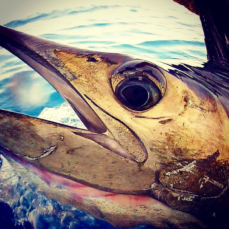 Sport Fishing Jaco Beach Costa Rica