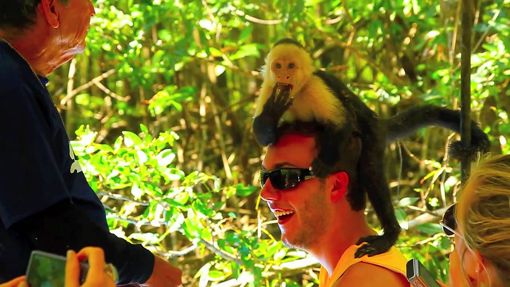 Monkey Tour Jaco Beach Costa Rica