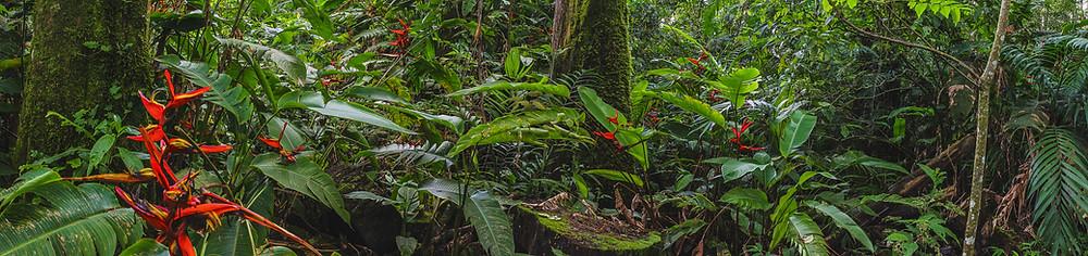 jungle Outside of Jaco Beach