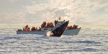 avistamiento-ballenas-bajacalifornia-2.j